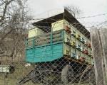 vecinii-albinelor11